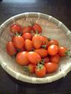 Tomato080706jpg